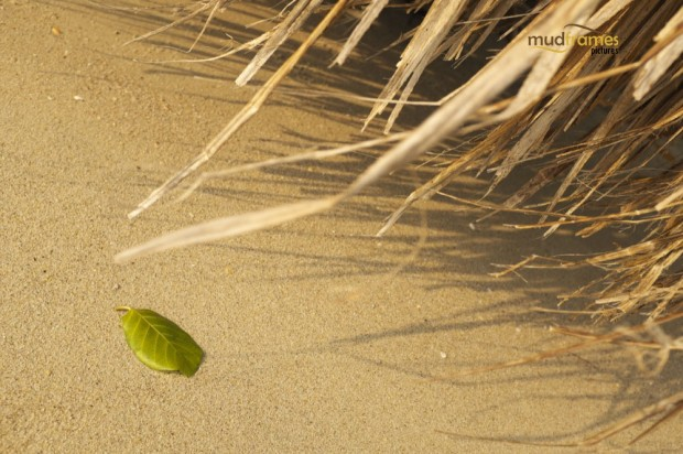 Lonesome green leaf on the beach