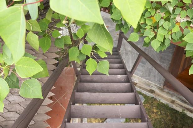 Wooden stairway at Templer Park Rainforest Retreat